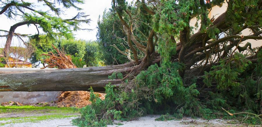 Fallen tree crop.png